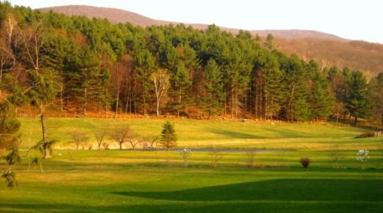 Floresta Nortenha